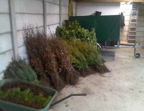 Planten in de verkoopschuur